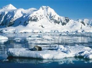 Antarktis_310x230